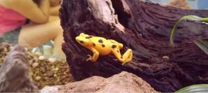 4goldenfrog