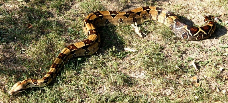 67bcommonboa