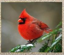 homeschool-cardinal