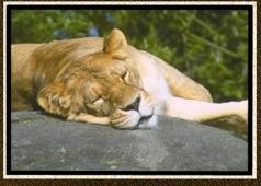 zoo_snooze