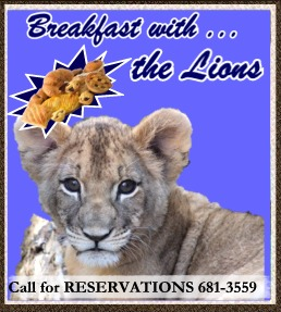 Small Breakfast with lions