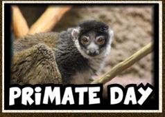 primate day