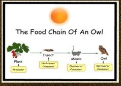 food chain2