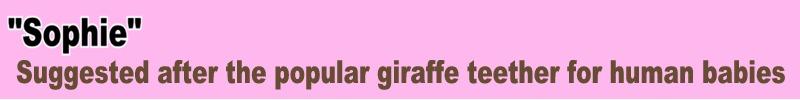 4 Giraffe Name Sophie